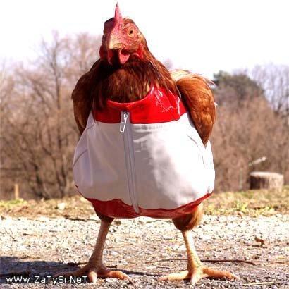 Боевая курица и другие