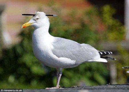 Бедная птичка
