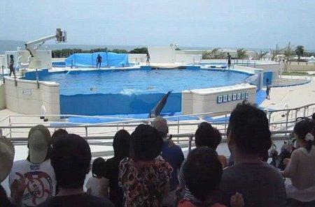 Неудачный прыжок дельфина