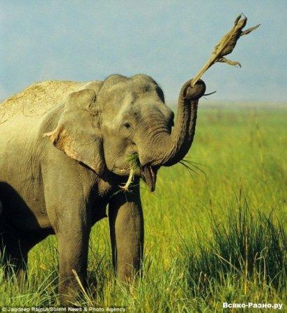 Забавы слонов