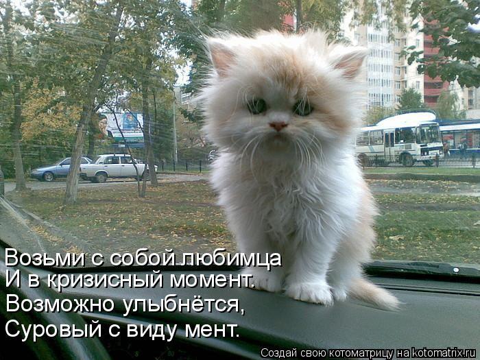 Котоматриця!)))) - Страница 3 1287405569_kotomatrix_28