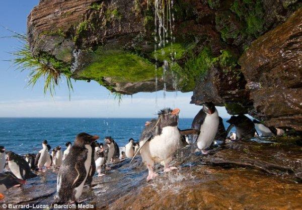 Душевая для пингвинов