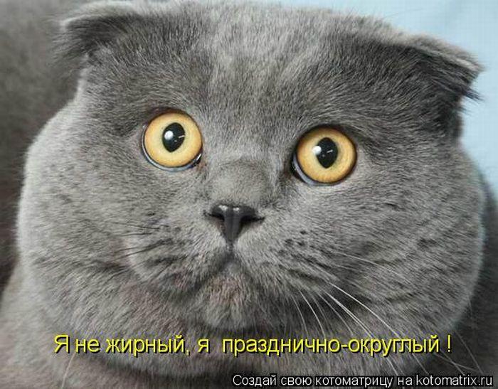 картинки смешные коты скачать