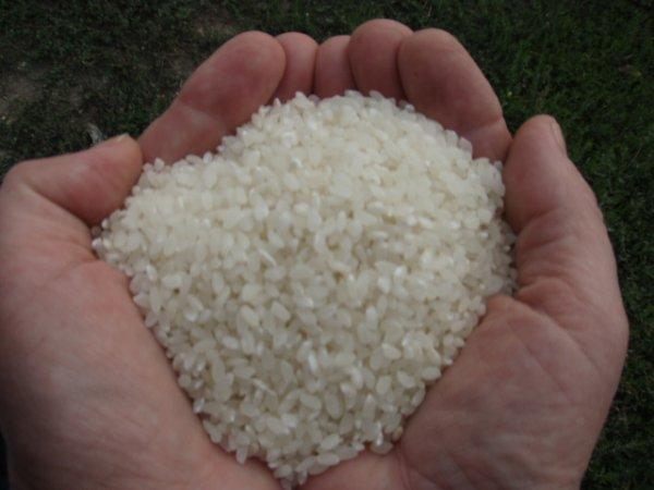 Факты о рисе