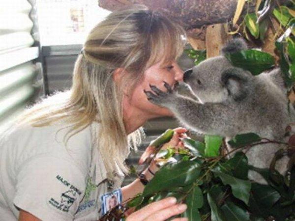 Спасение маленьких коал