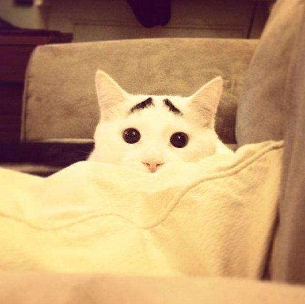 Кот Сэм - новый любимец сети