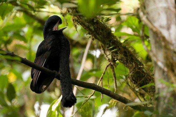Удивительные птицы планеты