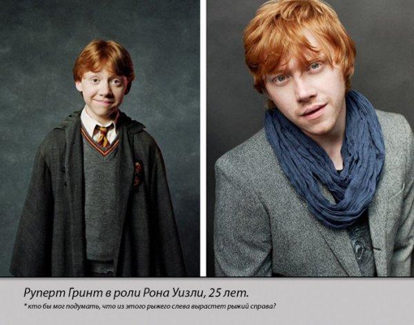 Герои кинологии Гарри Поттер тогда и сейчас